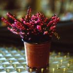 image-1-flower-pot-f1.8