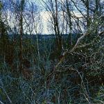 image-11-bogland