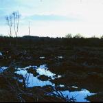 image-13-irish-bogland-evening-f5