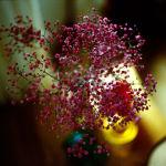 image-3-flowers-f2